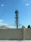 Image for W Ann Rd Palm Tree - Las Vegas, Nevada