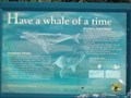 Image for Whale of a Time - Arakoon, NSW, Australia