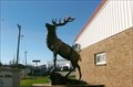 Image for Elk - Warreton, MO