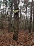 Image for Gefräßiger Baum bei Obertshausen - Hessen, Germany