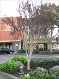 Image for Bill Matteson - Hayward, CA