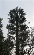 Image for Pine Tree Tower - St. Edna's Park, Dublin, IE