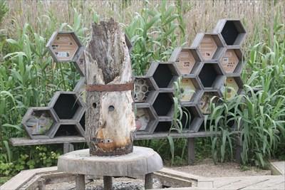 Une partie de l'espace réservé à la vie de l'abeille. Très intéressant pour expliquer à des enfants
