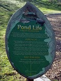 Image for Pond Life - Rivery Park, Georgetown, TX