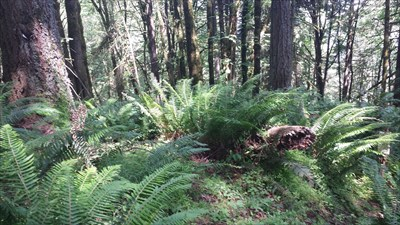 Sign-munching tree is on the left of the photo.  Witness post and benchmark are behind the ferns on the right.