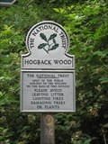 Image for Hogback Wood - Buckinghamshire