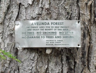 Avelinda Forest Sign