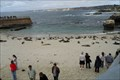 Image for Sewage spill closes La Jolla Children's Pool  -  San Diego, CA