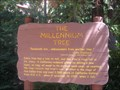 Image for The Millennium Tree - California Adventure, CA