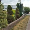 Image for Spiral conifers - Hillegom (NL)