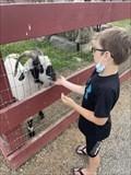 Image for Feed the Farm Animals - Silverman's Farm - Easton, CT