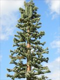 Image for One more pine tree -- Carmichael California
