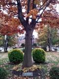 Image for The Liberty Tree - Palmyra, NJ