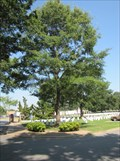 Image for Little Rock National Cemetery Bicentennial Tree - Little Rock, Arkansas