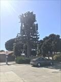 Image for Spanish Landing Tree - San Diego, CA