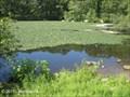 Image for Beaver Brook Reservation - Belmont, MA