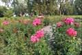 Image for Henderson Park Rose Garden - Lethbridge, Alberta