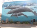 Image for Ceteceans in Whiterock