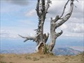 Image for Naneum Ridge Vista