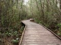 Image for Okefenokee Swamp Walk Boardwalk - Folkston, GA