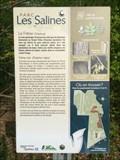 Image for Le frêne noir, Parc Les Salines, Saint-Hyacinthe, Qc