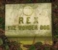Image for Rex the Wonder Dog - Linwood, NJ