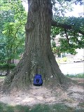 Image for Arlington Co. 2007 Co-Champ: Scarlet Oak