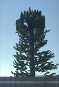 Image for I880 Cell Tree - Hayward, CA