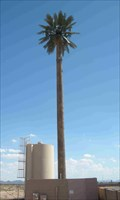Image for Talking Tree (McDowell & Cotton)