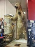 Image for Stuffed Polar Bear - Oakland, CA