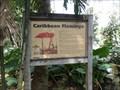 Image for Caribbean Flamingo  -  Davie, FL