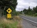 Image for Kiwis Cross Here, Tongariro National Park. North Is. New Zealand.