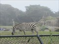 Image for Zebras at San Francisco Zoo - San Francisco, CA