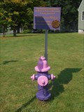 Image for Domestic Violence Awereness Hydrant - Oswego, NY