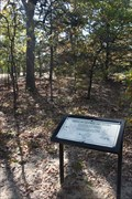 Image for Trees of Central Oklahoma -- Lake Murray SP, nr Ardmore OK