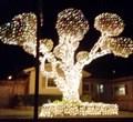 Image for Menlo Drive Tree - San Jose, CA