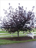 Image for James A. Richards Tree - Hilliard, Ohio