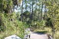 Image for Corkscrew Swamp Sanctuary - Naples, Florida