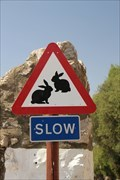 Image for Watch out for rabbits (Gibraltar)