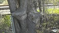 Image for L'arbre tentaculaire