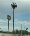 Image for Palm Tree - Palm Desert, CA