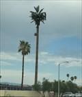 Image for Palm Tree - Palm Desert, CA