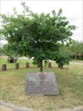Image for Pope's Oak in Botanical Garden - Powsin, Poland