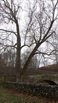 Image for Burnside Bridge Witness Tree - Sharpsburg MD