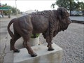Image for American Bison - Hugo, OK