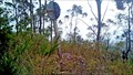 Image for Lansdowne Trig, Lansdowne Forest, NSW