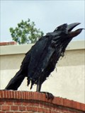 Image for Crow - Albany, TX