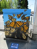 Image for Monarch Butterflies - Redwood City, CA