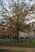 Image for George Washington Oak -- Charlotte NC
