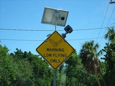 Uncommon Crossing Signs - Owl Warning Sign, Sanibel Island, Florida, USA
